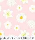 Chrysanthemum, Aster, Camellia, Cosmos Lily Flower 43848031
