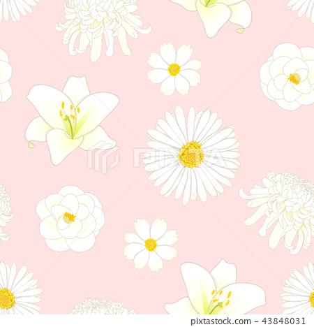 Chrysanthemum, Aster, Camellia, Cosmos Lily Flower 43848031