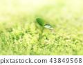 새싹, 떡잎, 발아 43849568