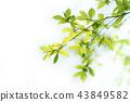 foliage, leaf, leafs 43849582