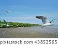 鸟儿 鸟 海鸥 43852595