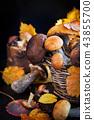 Wild forest edible mushrooms (boletus) in basket 43855700