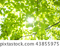 Refreshing fresh green and sun 43855975