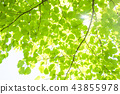 tender green, verdure, foliage 43855978