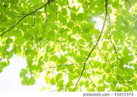 Refreshing fresh green 43855978