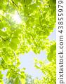 tender green, verdure, foliage 43855979