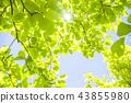 tender green, verdure, foliage 43855980