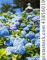 japan, hokkaido, otaru 43856019