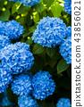 japan, hokkaido, otaru 43856021