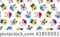 หมา,สุนัช,สุนัข 43856091