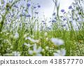 자연, 풍경, 꽃 43857770
