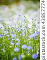 자연, 풍경, 꽃 43857774