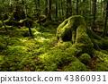 이끼, 숲, 수풀 43860931
