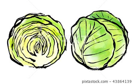 插圖 水彩畫 蔬菜 43864139