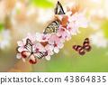 spring blossom blue 43864835