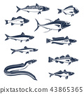 Sea and ocean fishes vector icons 43865365