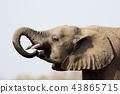 動物 哺乳動物 陸生動物 43865715