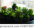 Cactus plant background. 43867997