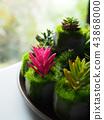 Cactus plant background. 43868000