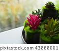 Cactus plant background. 43868001