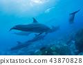 海豚 43870828
