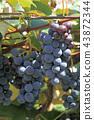 과일, 과실, 열매 43872344
