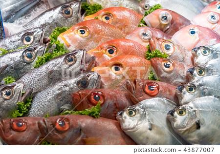 鲜鱼 43877007