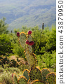 flower, arizona, saguaro 43879950