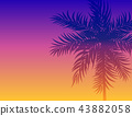 palm, tree, leaf 43882058