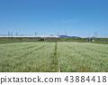 소바畑 43884418