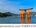 在嚴島神社的鳥取 43885339