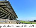 วันที่แดดจ้าสนามแข่งม้าโตเกียวอันคึกคัก 43885693