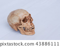 Side view of human skull 43886111