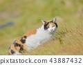 一只猫 43887432