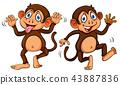 Two cute cartoon monkeys 43887836