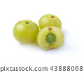 gooseberries on white background 43888068