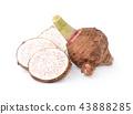 taro isolated on white background 43888285