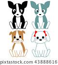 개, 강아지, dog 43888616