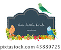 小的鳥和黑板框架 43889725