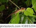 도마뱀, 밤, 잎 43893204