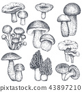 Vector collection of hand drawn mushrooms in sketch style 43897210