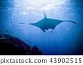 水下飛行 43902515