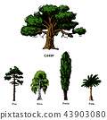 Vector tree sketch hand drawn style types green forest pine treetops collection of birch, cedar and 43903080