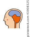 大腦 頭腦 數字動畫 43908325