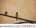 Sparrow bite grass blade 43908432