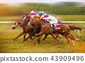 Race horses with jockeys on the home straight 43909496