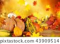 halloween, autumn, pumpkin 43909514