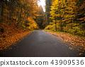 Autumn forest. Beautiful rural scenery. 43909536