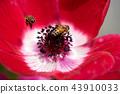 銀蓮花和蜜蜂 43910033