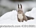 松鼠 日本北海道松鼠 松鼠常見的東 43910681